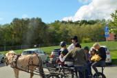 Häst o vagn