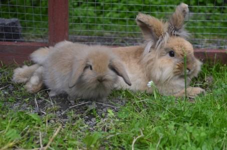 kaniner 2