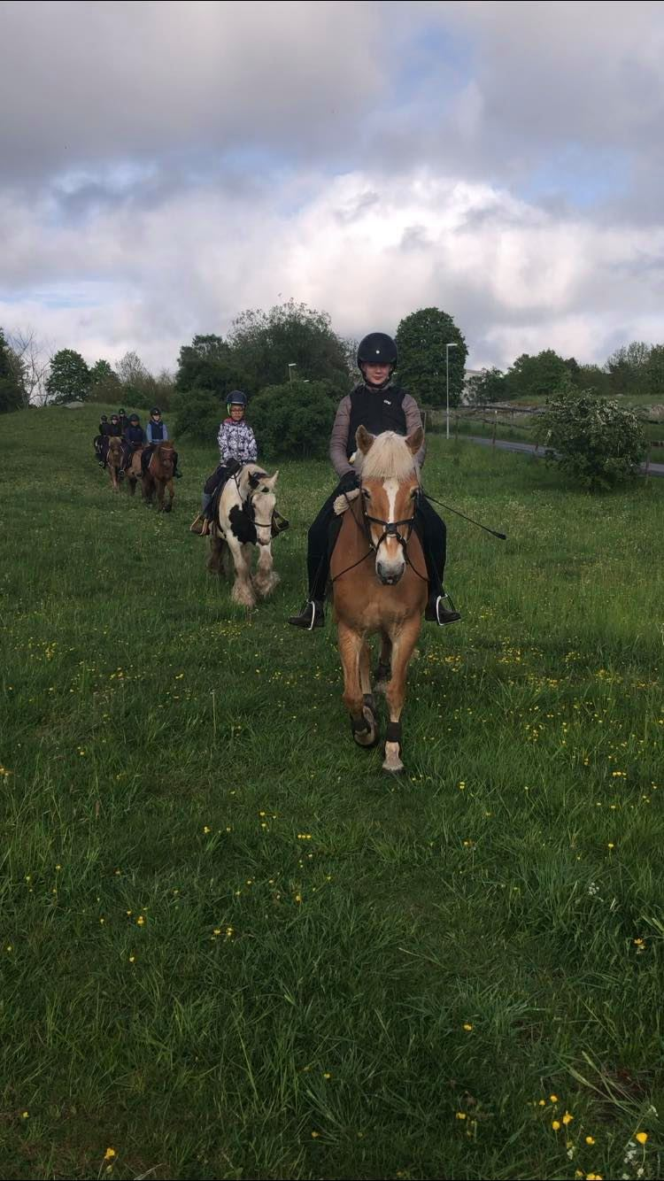 Hästgruppen2