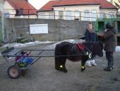 djuren-2010-146