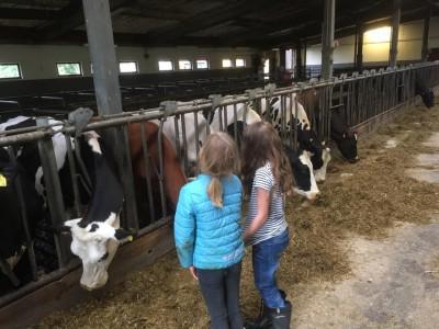 barn med kor
