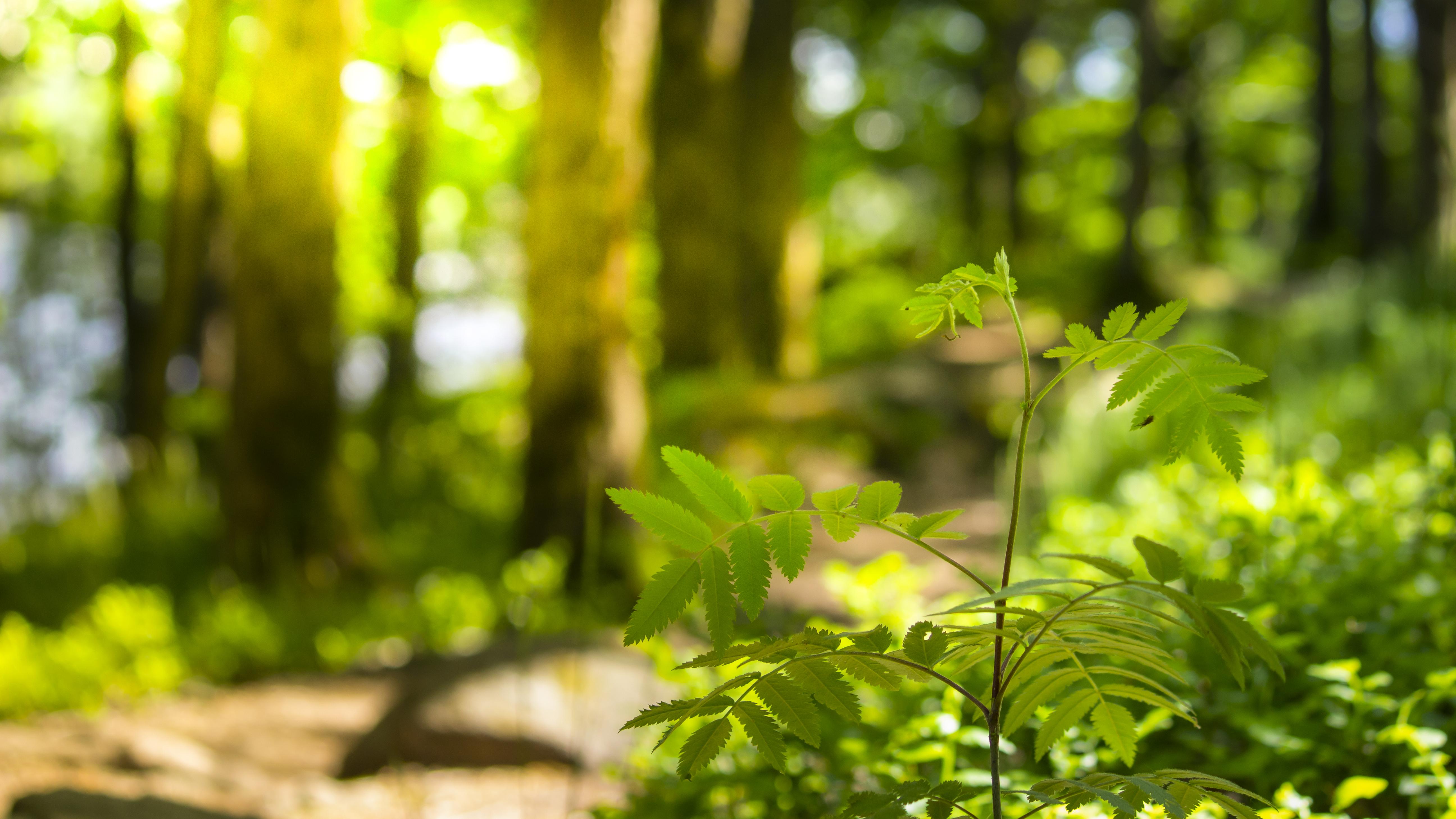 Natur_Summer_2020_000