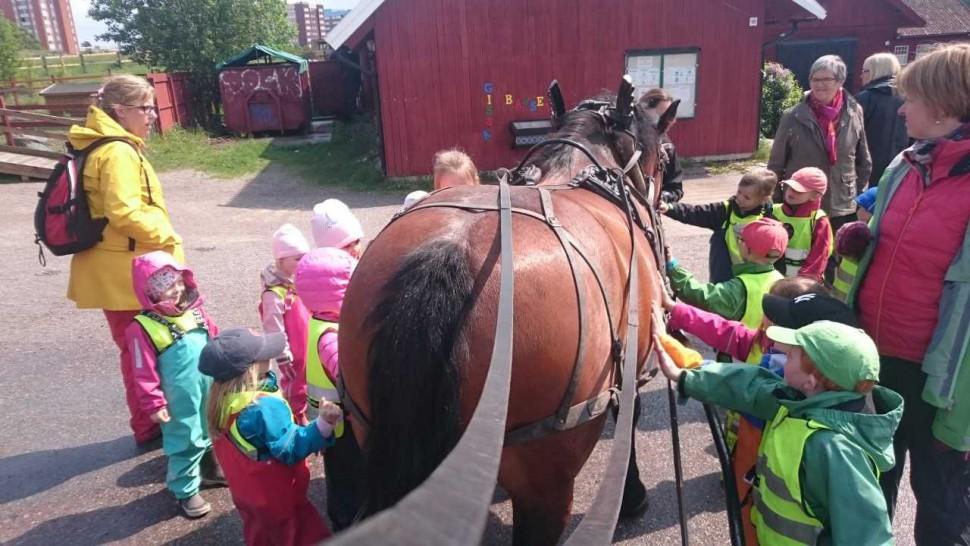 Studiebesök på Akalla 4H-gård. Foto: Erica Svensson