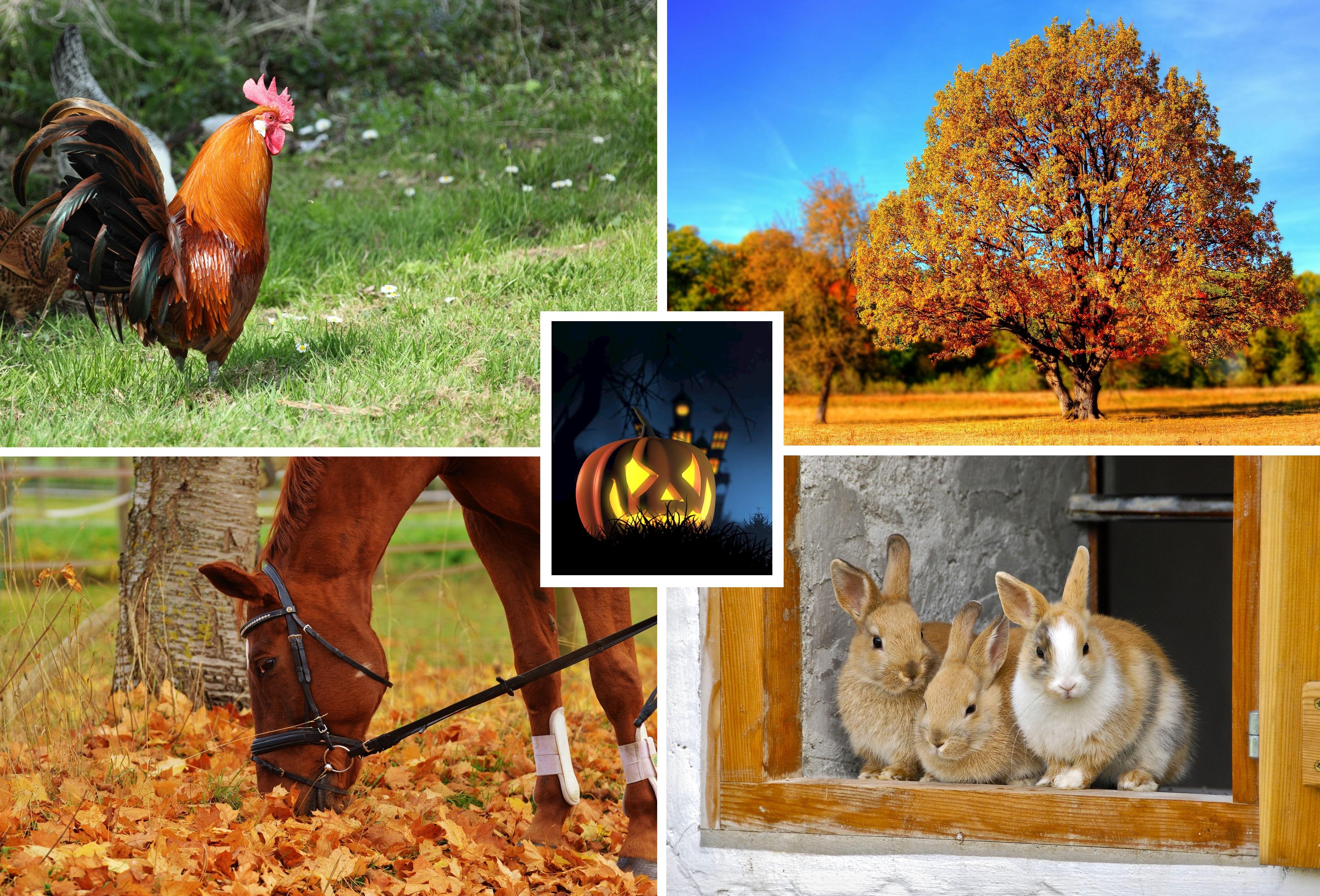 4h_höstlov_dagläger_djurläger_v44_barn_djur_stockholm_halloween