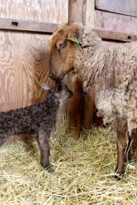 Doris med sitt lamm