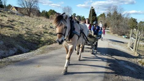 Utflykt med häst och vagn