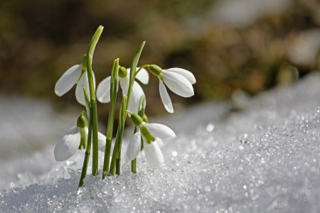 spring-1166564_1920